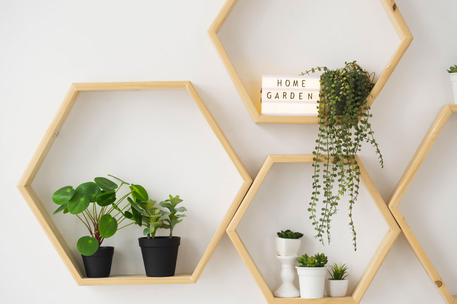 COLORED AND RESISTANT PLANTS