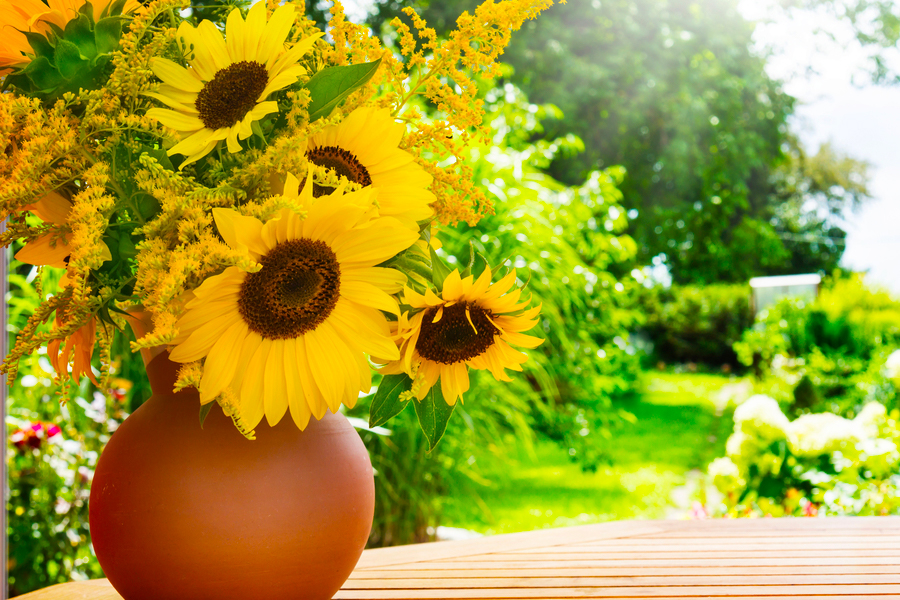 READINGS FOR THE SUMMER? HERE IS THE SUNFLOWER