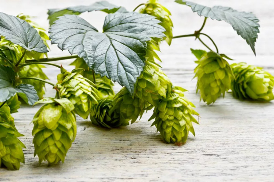 BEER, HOPS AND MUCH MORE ...