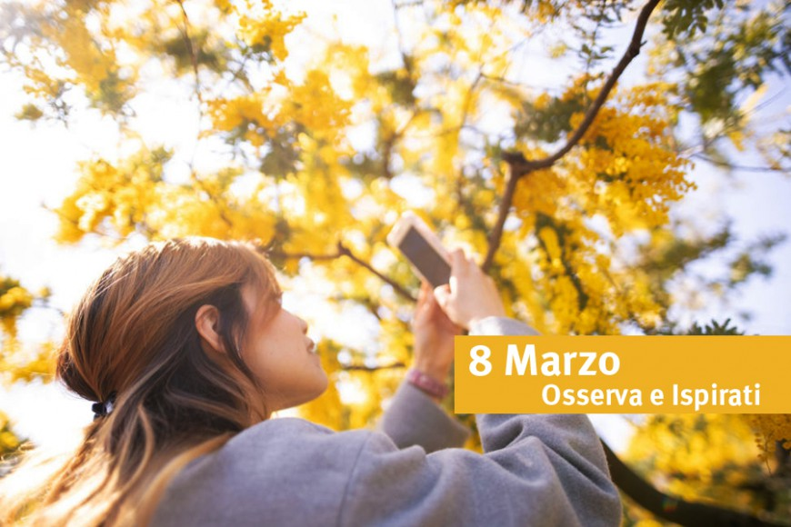 OBSERVE AND INSPIRED, 8 March and the mimosa
